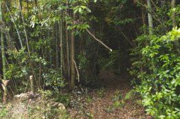 竹林入り口